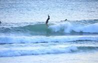 Fine Surfcraft by Andrew Warhurst