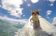 ニャンコのサーフィンが可愛すぎる